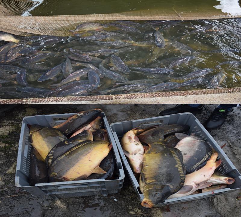 Опасную рыбу хранили в антисанитарных условиях и продавали в Кишинёве (ВИДЕО)