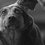 На улице Узинелор будут благоустроены вольеры для бездомных животных