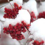 Суровые морозы и сильнейший ветер ждут жителей Молдовы в первые дни марта