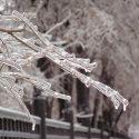 Зима в марте и лед на деревьях грозят Молдове неурожаем (ФОТО)