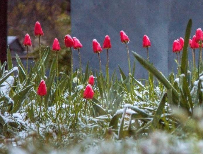 Зима вместо весны: Молдову ждет резкое ухудшение погоды