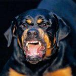 Разъяренные бойцовские собаки напали на школьника в Приднестровье