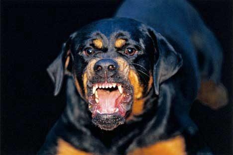 Шокирующий случай в Страшенах: собака искусала 4 детей и взрослого и была застрелена полицейским