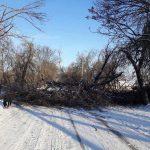 Внимание, водители! Упавшее дерево заблокировало движение на Мунчештской
