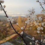 Средняя температура воздуха в Молдове на минувшей неделе превысила норму на 3,5 градуса