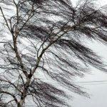 Не наступать на упавшие провода и не ходить под деревьями: советы ГИЧС в связи с ветром