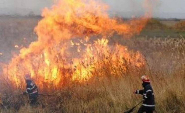 Возгорания растительности более чем на 70 гектарах были ликвидированы за 24 часа