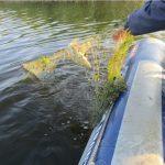 Браконьеры в период нереста закинули в водоёмы более 1 км сетей (ФОТО)