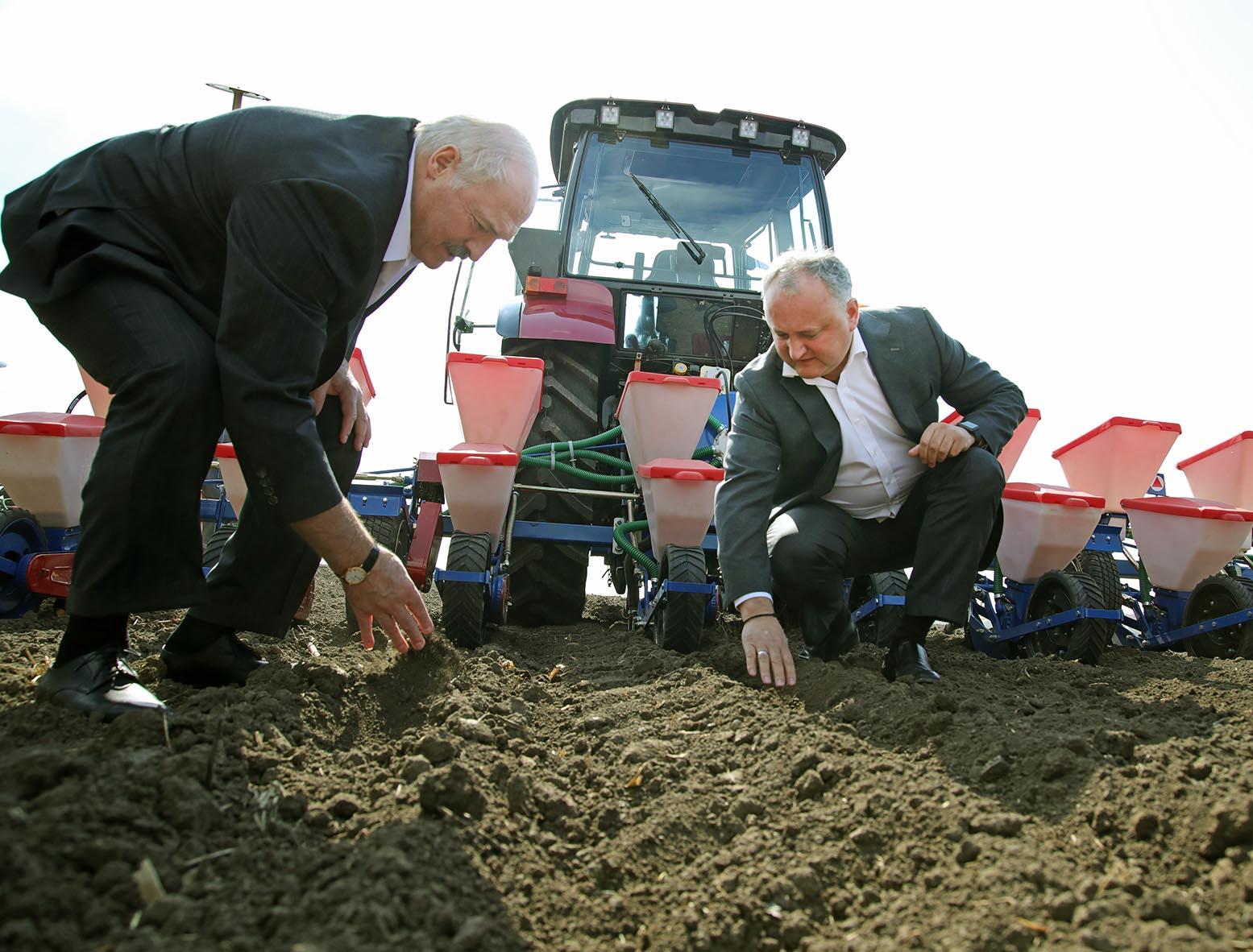 Додон и Лукашенко вместе засеяли несколько рядов кукурузы в Криулянах (ВИДЕО)