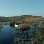 Спасательная операция на воде: раненый лебедь оказался в ловушке на озере (ВИДЕО, ФОТО)