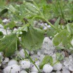 Прогнозы синоптиков начинают сбываться: в Шолданештах грянул ливень с градом (ВИДЕО)
