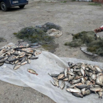 В Молдове продолжают орудовать рыбаки-браконьеры (ФОТО)