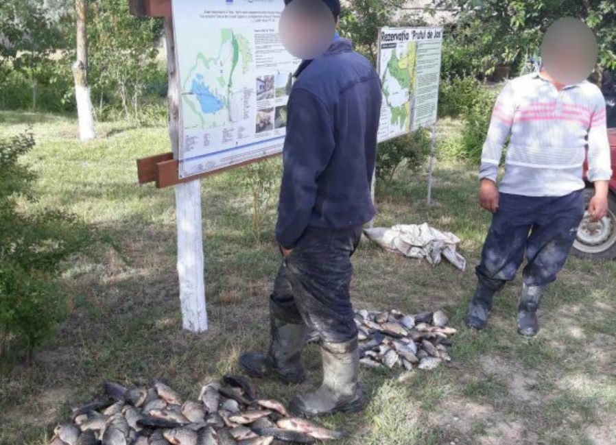 Два рыбака-браконьера задержаны с 50 кг рыбы на берегу озера Белеу (ВИДЕО)
