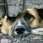 За лишение домашнего животного еды можно будет получить штраф 4500 леев