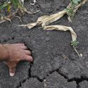 Готова ли Молдова к засухе?