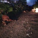 Стихия на юге Молдовы: повалены деревья, оборваны провода, убиты животные (ВИДЕО)