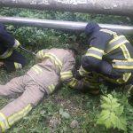 """История про """"трёх танкистов"""": молдавский пожарный рассказал, как спасали 3 собак, упавших в канализацию (ФОТО, ВИДЕО)"""