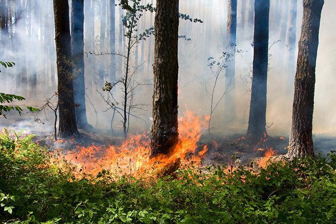 Желтый код пожароопасности в Молдове продлён