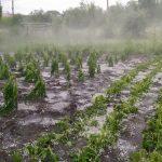 Проливные дожди уничтожили сельхозугодия во многих городах и сёлах Молдовы