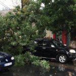 В столице дерево упало на дорогой автомобиль (ФОТО)