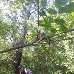 Близ молдавской границы была обнаружена гигантская змея (ФОТО)
