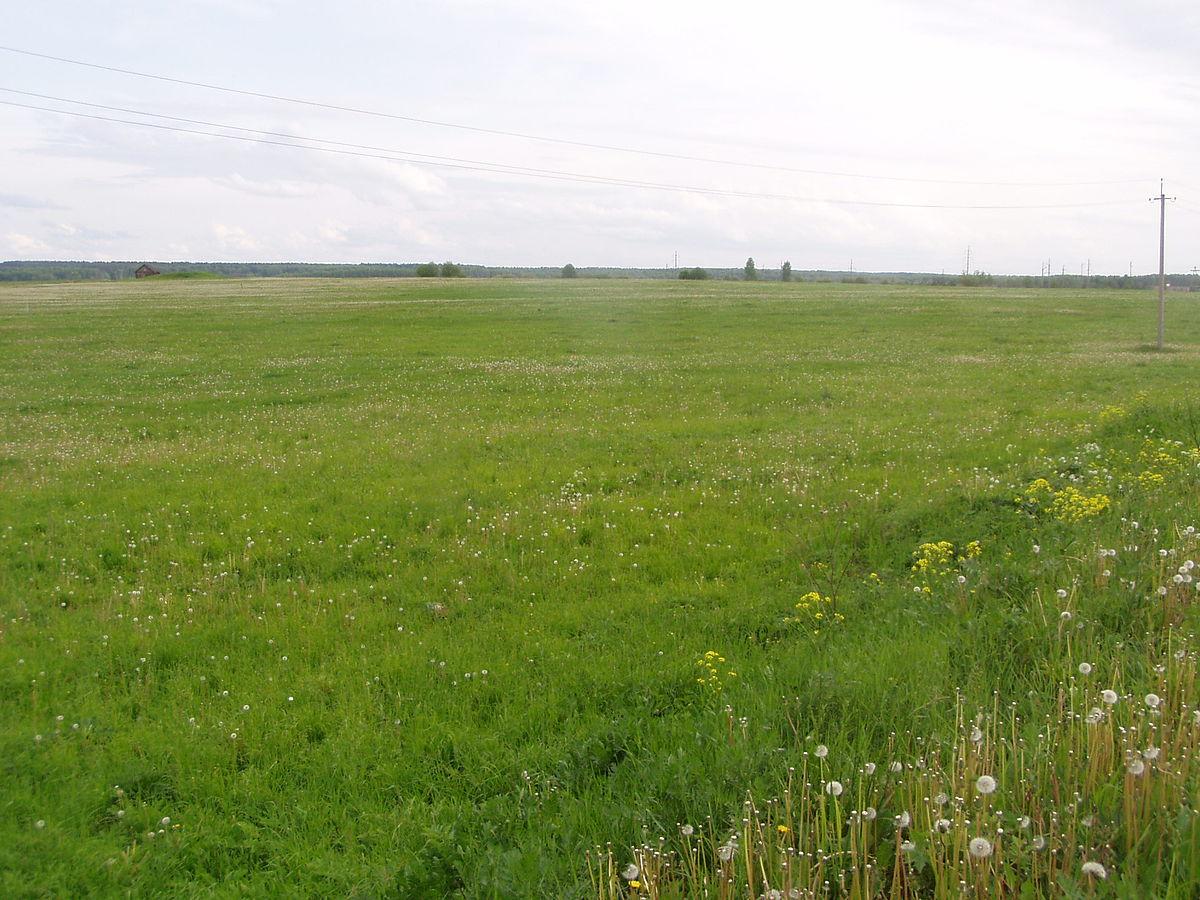 Обнародована предварительная причина смерти роженицы в поле в Оргеевском районе (ВИДЕО)