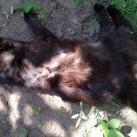 В Дубоссарском районе изверг убил кота тремя выстрелами из пистолета