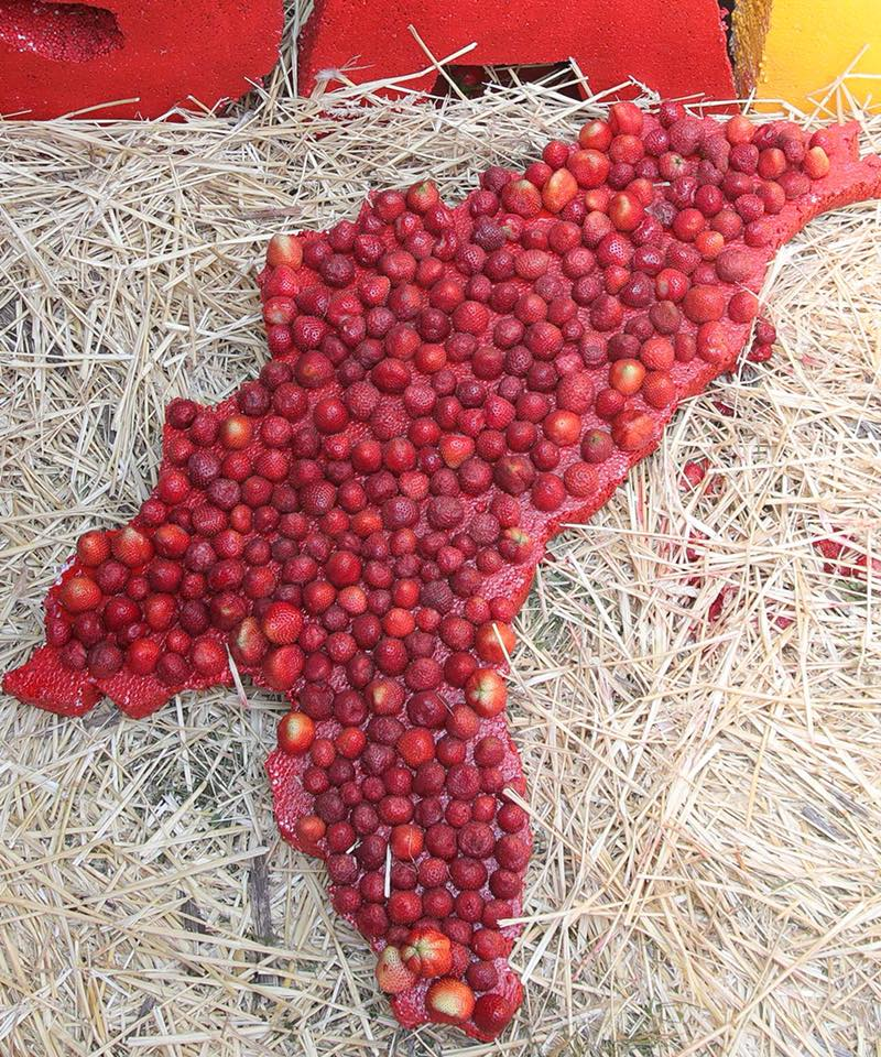 Додон: Объем экспорта клубники в Россию и Беларусь увеличился в 6-7 раз
