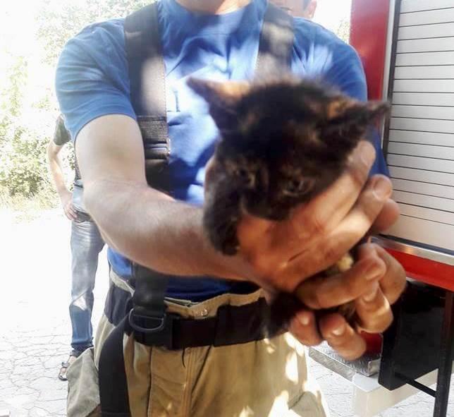 В Кишиневе спасли застрявшего на два дня в трубе котенка (ФОТО)