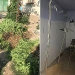 """Житель Кагула организовал """"бизнес"""", культивируя дома наркосодержащие растения (ФОТО)"""