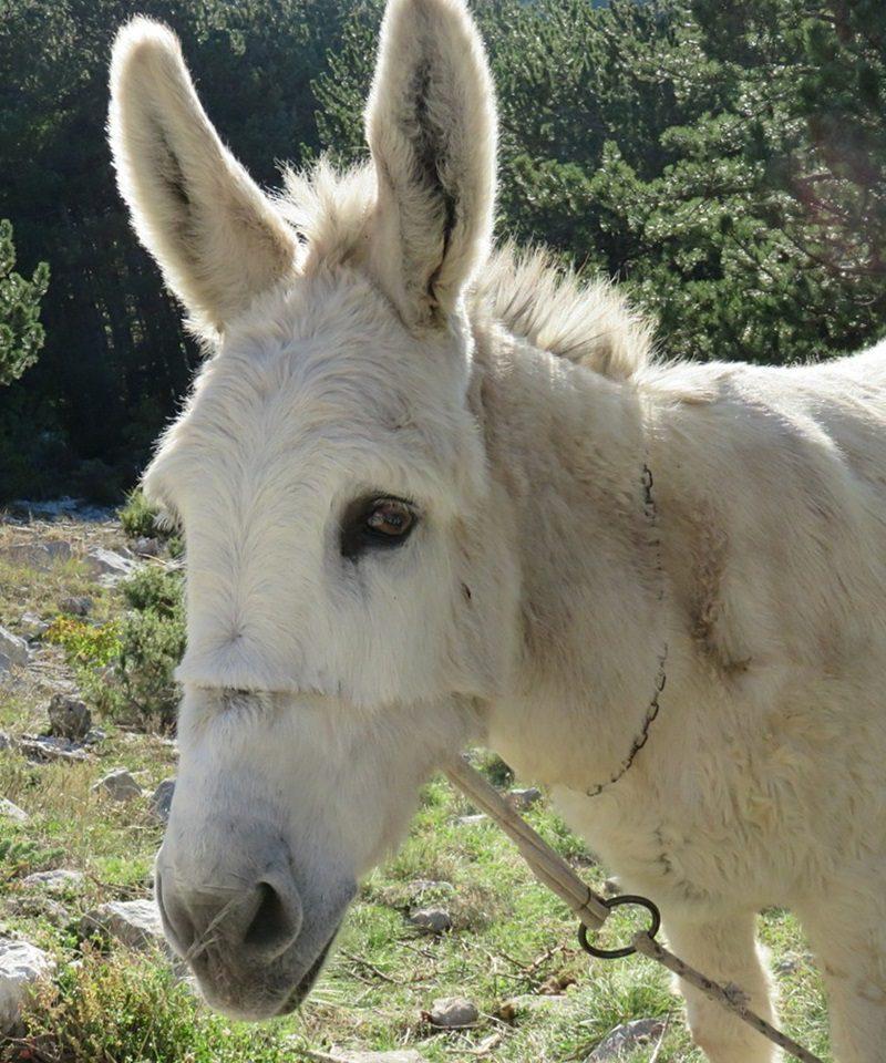 В Комрате машина столкнулась с ослом: животное погибло на месте