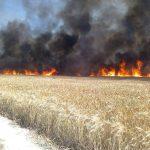 В Штефан-Водском районе пожар уничтожил часть пшеничного поля