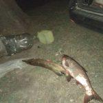 Служба рыбоохраны задержала трёх браконьеров с рыболовными сетями (ФОТО)