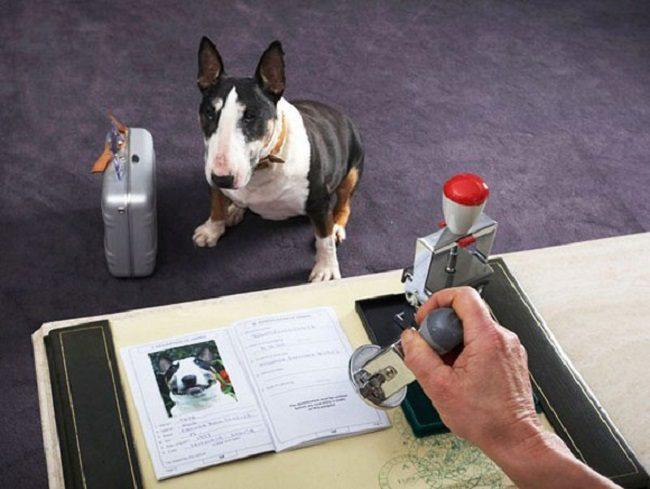 Всем домашним животным в Молдове будут выдавать паспорта