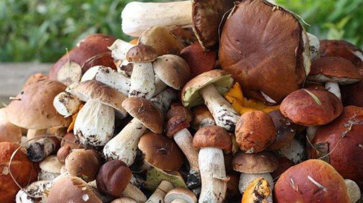 Целая семья в Ниспоренском районе угодила в реанимацию, отравившись грибами