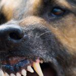 В Кишиневе 8-летнего ребенка на детской площадке покусала бродячая собака (ВИДЕО)