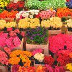 Массовые проверки ждут торговцев цветами по случаю Дня всех влюблённых