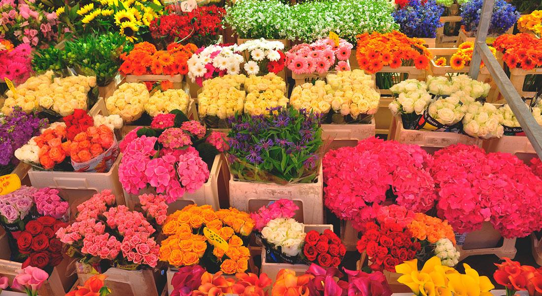 """В преддверии """"Первого звонка"""" налоговая проведет проверки цветочных магазинов"""