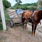 Кучер не справился с управлением лошадью и врезался на повозке в джип (ФОТО)