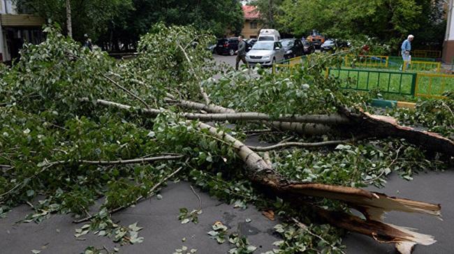 Десятки поваленных деревьев и отключения света: в Приднестровье назвали последствия проливных дождей