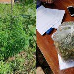 Полкило марихуаны и 14 кустов конопли изъяли полицейские у жителя Рышкань (ВИДЕО)