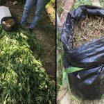 Наркотики в огороде: житель Сынжеры попался на выращивании запрещённых растений (ВИДЕО)