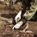 В Бендерах обнаружили человеческие останки