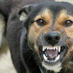В Штефан-Водэ зарегистрировали случай бешенства у собаки