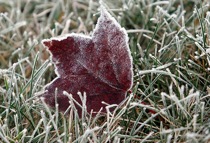Жёлтый код в связи с заморозками остаётся в силе: какая погода ждёт жителей страны