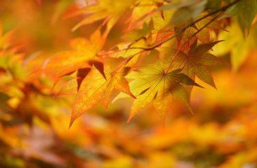 Сегодня – день осеннего равноденствия: теперь ночи будут становиться всё длиннее