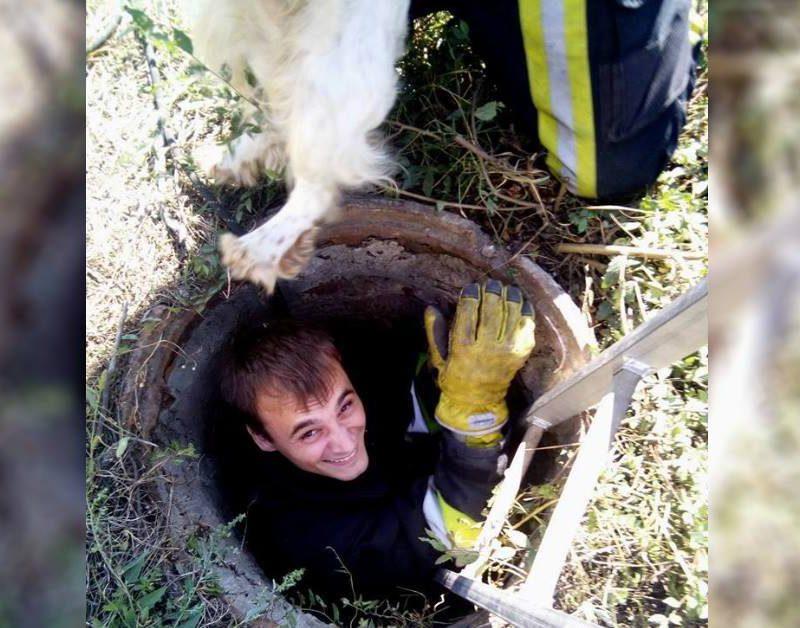 На Ботанике спасатели вызволили собаку, провалившуюся в канализационный колодец (ФОТО)