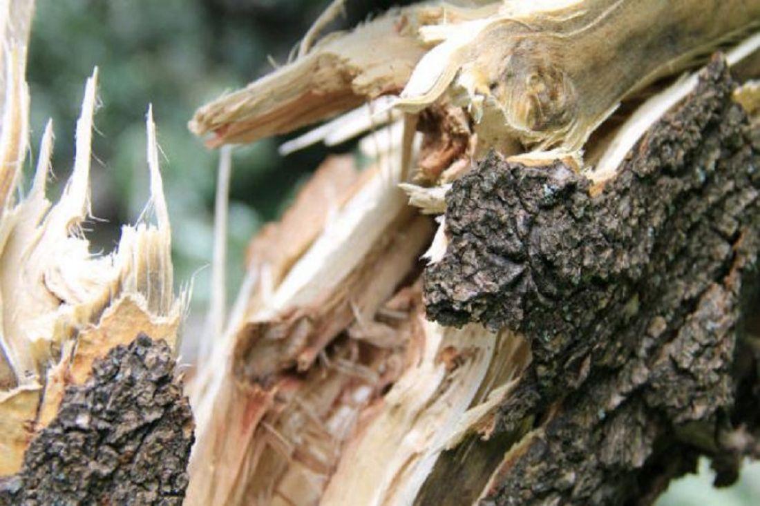 Непогода в Приднестровье: на автомобильную стоянку рухнуло дерево
