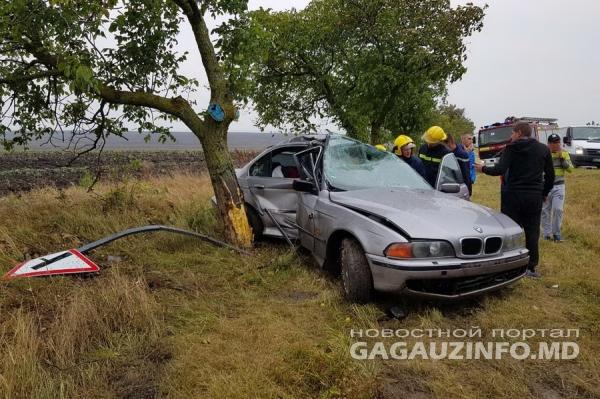 На полном ходу в дерево: ДТП с пострадавшим произошло возле Комрата (ФОТО)