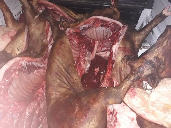 300 кг свинины, 10 говяжьих туш и 600 кг рыбы в антисанитарных условиях везли на продажу на столичный рынок (ФОТО)